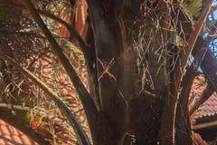 Araña en el árbol fotografía de archivo libre de regalías
