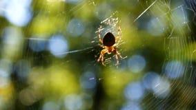 Araña en el bosque almacen de metraje de vídeo