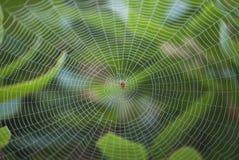 Araña en el centro del Web grande Imagen de archivo