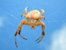 Araña en el cielo Fotos de archivo libres de regalías