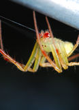 Araña en el jardín Foto de archivo