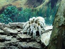 Araña en el parque zoológico en Zagreb fotos de archivo