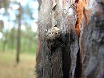 Araña en el tronco de árbol imágenes de archivo libres de regalías