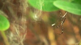 Araña en el Web almacen de metraje de vídeo