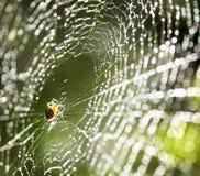 Araña en el Web. Fotos de archivo libres de regalías