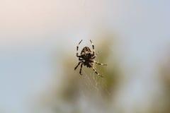 Araña en el Web Fotos de archivo libres de regalías