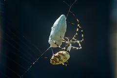 Araña en el web con la explotación minera Fotos de archivo libres de regalías