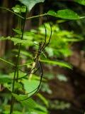 Araña en el web de araña en el bosque Fotos de archivo