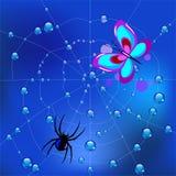Araña en el web en descensos de rocío y una mariposa cogida Imagenes de archivo