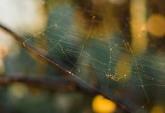Araña en el web en el sol Fotos de archivo