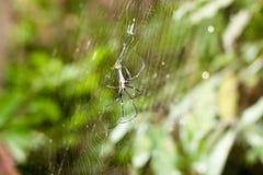 Araña en el web en la naturaleza Imagenes de archivo