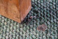 Araña en la alfombra cerca de las piernas de la tabla imagenes de archivo