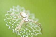 Araña en la casa Fotos de archivo