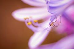Araña en la flor Fotografía de archivo