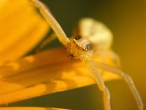 Araña en la flor fotografía de archivo libre de regalías