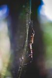 Araña en la Florida Fotos de archivo libres de regalías