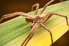 Araña en la hoja Imágenes de archivo libres de regalías