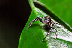 Araña en la hoja Fotos de archivo libres de regalías