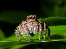 Araña en la hoja verde. Foto de archivo