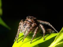 Araña en la hoja verde. Fotografía de archivo