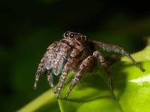 Araña en la hoja verde. Imágenes de archivo libres de regalías