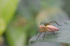 Araña en la hoja verde Fotos de archivo