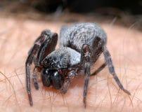Araña en la mano Fotos de archivo