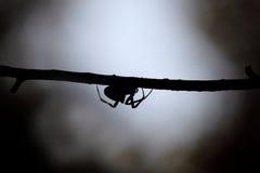 Araña en la oscuridad Fotos de archivo libres de regalías