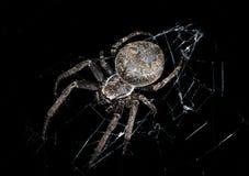 Araña en la oscuridad de la noche Fotos de archivo