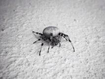Araña en la pared Imágenes de archivo libres de regalías