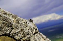 Araña en la piedra Imagen de archivo libre de regalías