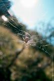 Araña en la red de la belleza del día de la sol del web Imágenes de archivo libres de regalías