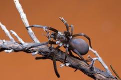 Araña en las ramas de madera Foto de archivo