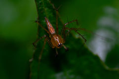 Araña en macro de la planta Fotos de archivo