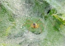 Araña en redes Imagen de archivo