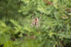 Araña en su red foto de archivo