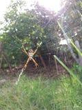 Araña en su red foto de archivo libre de regalías