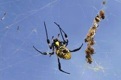Araña en su wab Imágenes de archivo libres de regalías