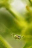Araña en su Web Foto de archivo libre de regalías