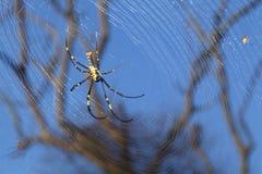 Araña en su Web Imagenes de archivo