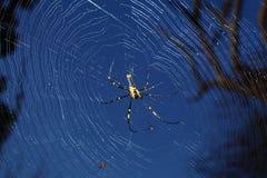 Araña en su Web Imagen de archivo