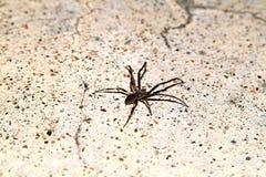 Araña en suelo Foto de archivo libre de regalías
