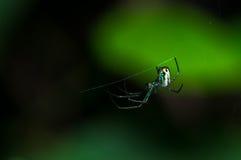 Araña en telaraña Foto de archivo
