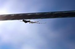 Araña en un alambre Fotografía de archivo libre de regalías