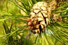 Araña en un cono Imagen de archivo libre de regalías