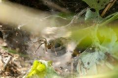 Araña en un Web Fotografía de archivo libre de regalías