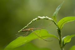 Araña en un Web Fotografía de archivo