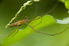 Araña en un Web Foto de archivo libre de regalías