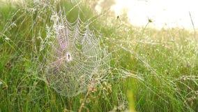 Araña en un Web almacen de metraje de vídeo
