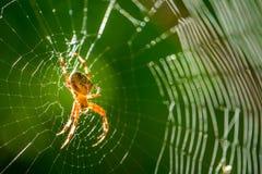 Araña en un Web Imágenes de archivo libres de regalías